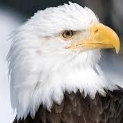 Eaglewatch22